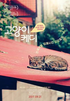 고양이 케디 | 제다 토룬