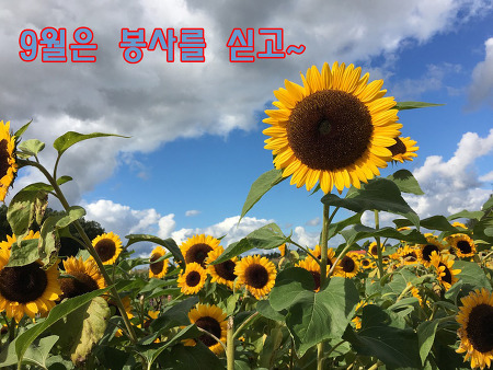 9월의 풍성한 추석맞이 자원봉사