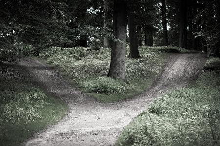 [활동가 편지] 걸어왔던 길, 가지 않은 길
