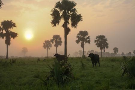 아프리카 우간다 단기선교여행_2