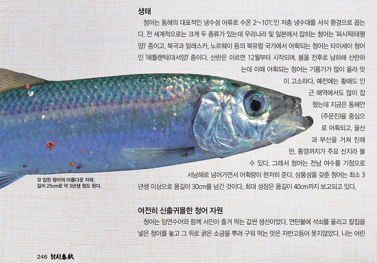 선비를 살찌게 한 물고기 '청어'