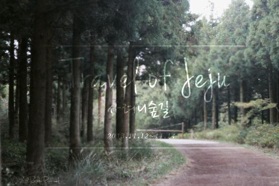 [2013.제주도여행] 힐링산책로, 제주사려니숲길
