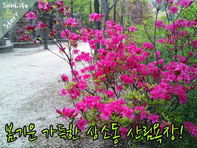 [대전 가볼만한 곳] 봄기운 가득한 상소동 산림욕장!