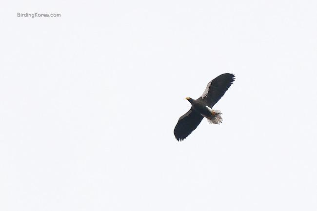 Targets of Core Winter Birding Trip