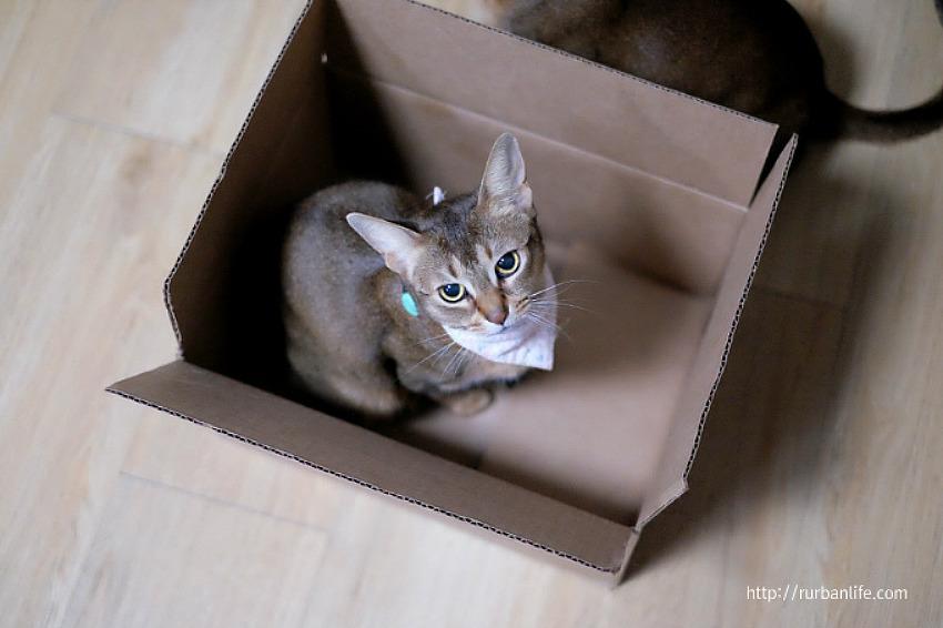 내 박스 넘보지마