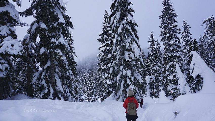 Mt. Seymour snowshoeing : 밴쿠버 겨울나기