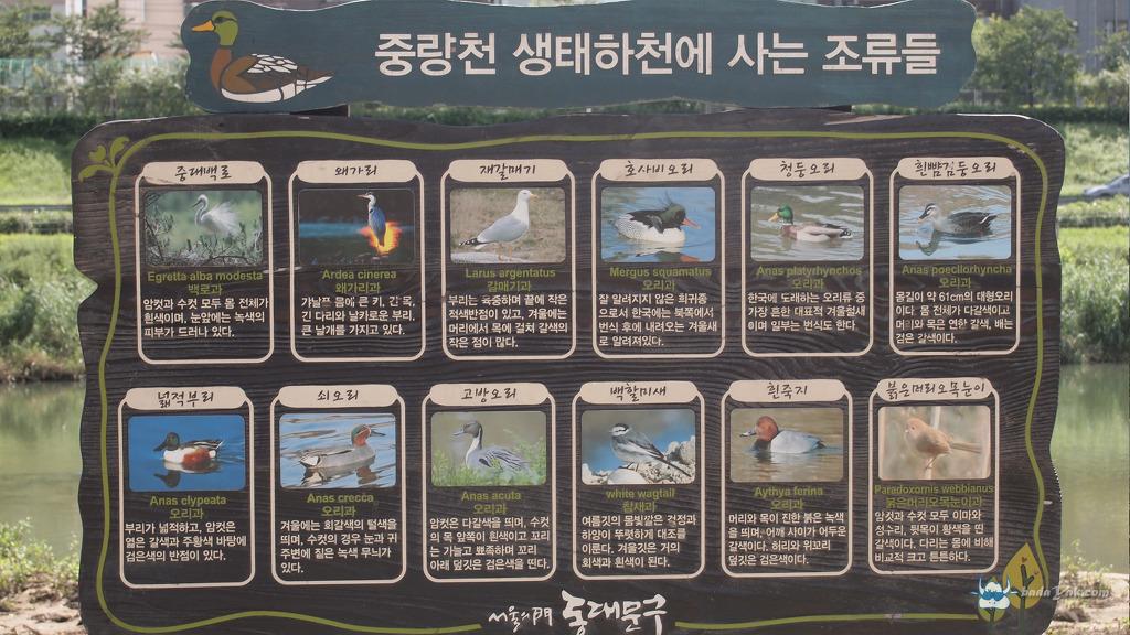 성북구 중랑천