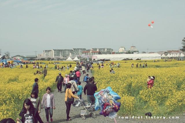 [제주풍경] 2011 제주왕벚꽃축제를 가다!!