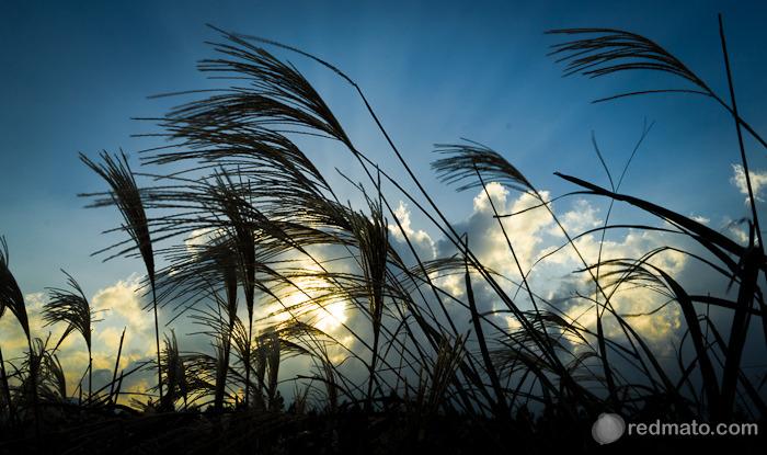 억새와 하늘