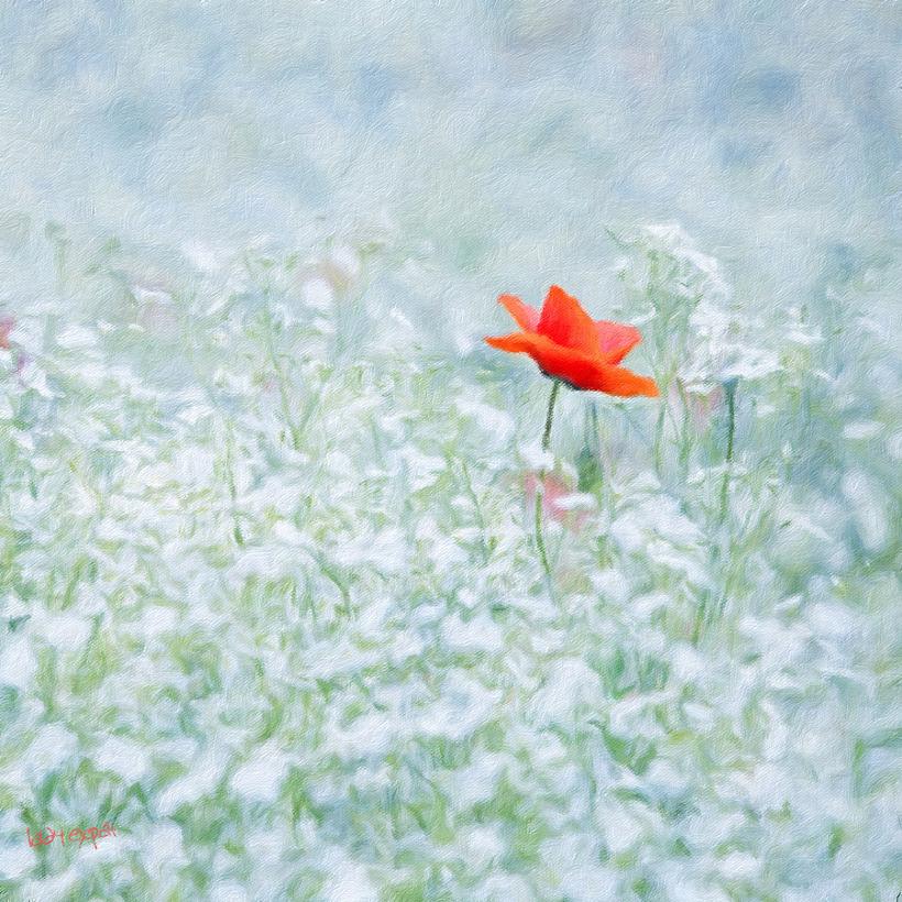 [영국의 현충일] Remembrance Day
