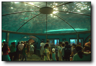 Dolphin Dome