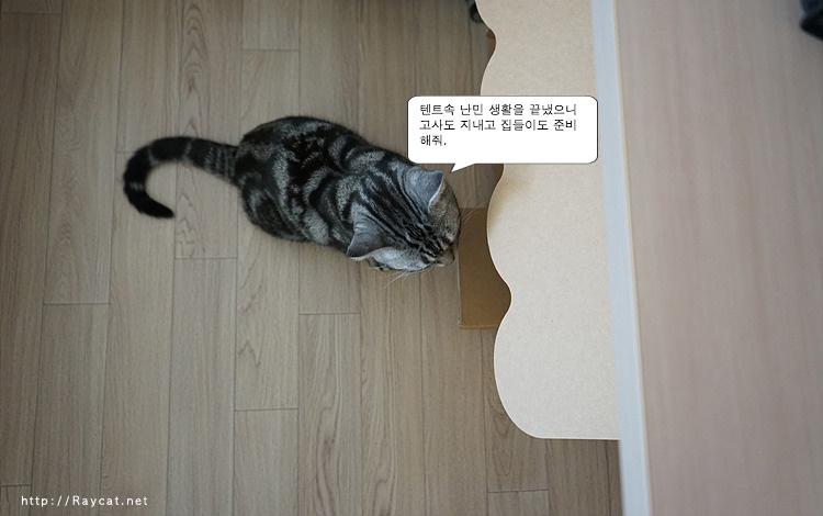 고양이,야웅군,반려동물