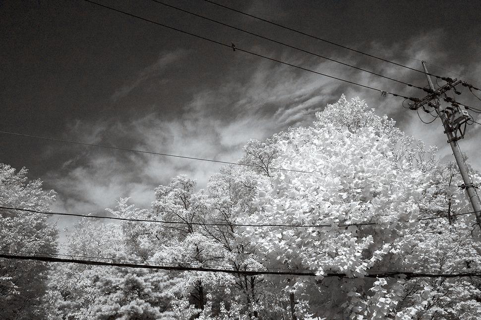한여름 우거진 나뭇잎이 전깃줄에 널려 쉬고있는 사진