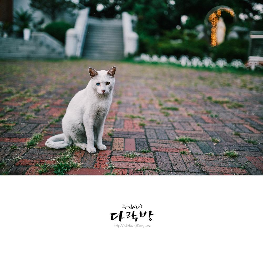 칠임성당 - 오드아이 고양이