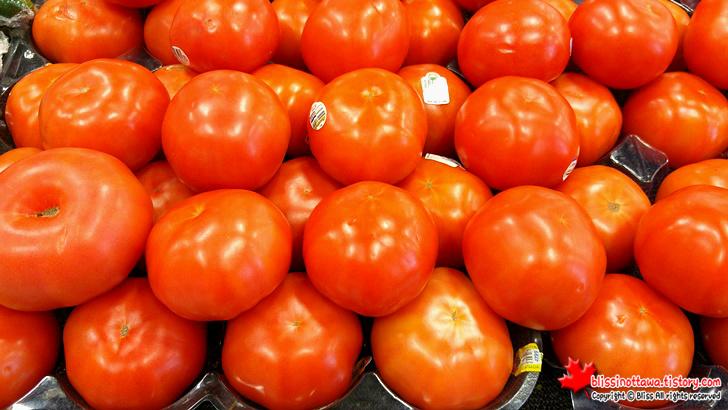 핫 하우스 토마토(Hot House tomato)