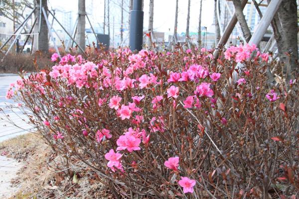 이상기온-지구온난화-이산화탄소-스모그-오존경보-북극의 눈물-남극-지진-해일-쓰나미-슈퍼태풍-봄꽃-여름꽃-개화시기-꽃-봄-계절-온도-춘화처리-꽃이름