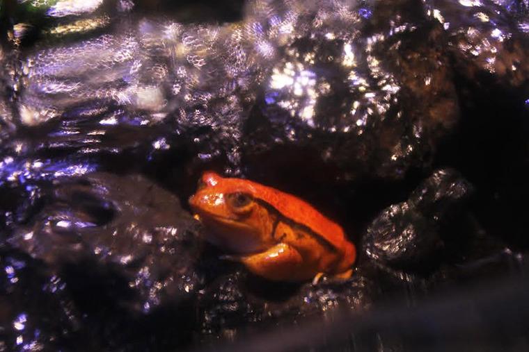 마법사 동물, 해리 개구리, 신기한 생물, 신기한 동물