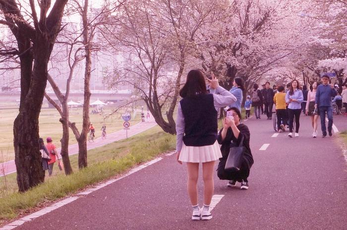 갑천산책길 봄나들이