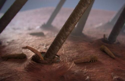 모낭충 Demodex folliculorum