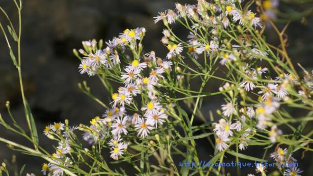 온천천의 들꽃