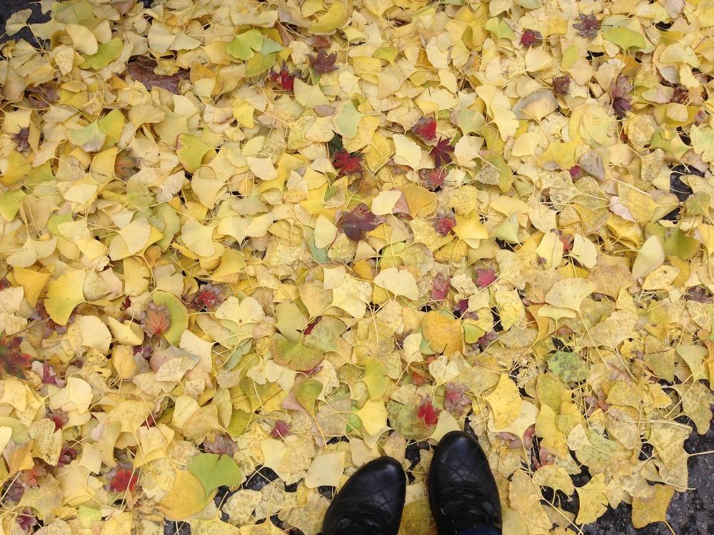 가을을 밟고