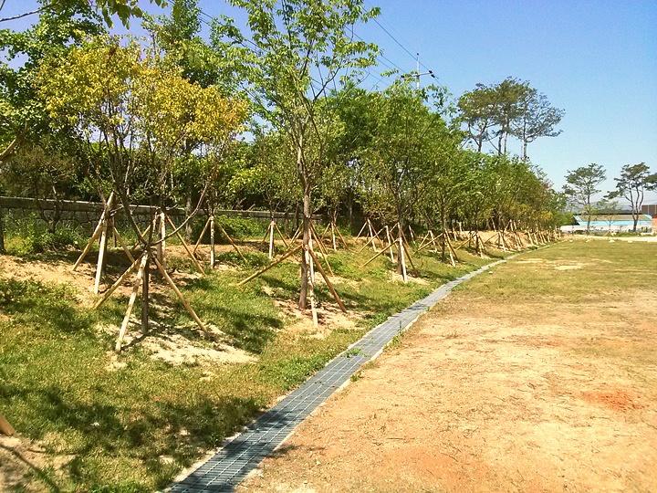 남원용북중학교 경계숲