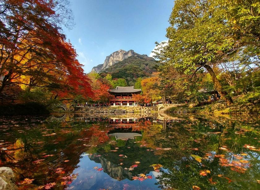 울긋불긋 가을의 색으로 물든다, 장성 백양사 단풍