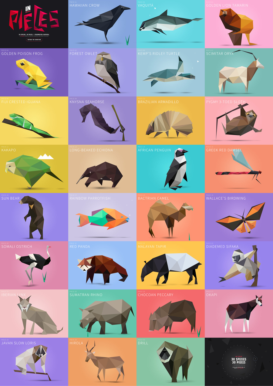 30 SPECIES, 30 PIECES