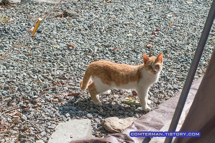 설매재 자연휴양림 고양이