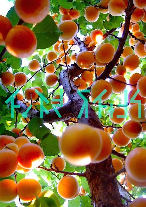 세상의 수많은 열매와 다른 생명력의 열매