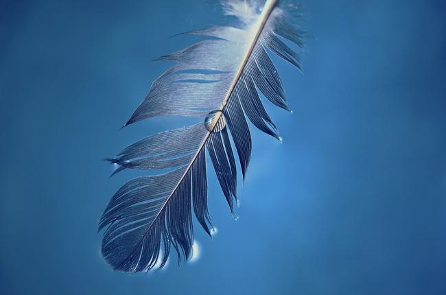 깃털 feather
