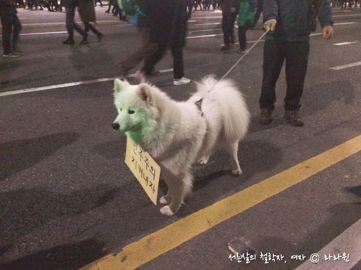 촛불집회 강아지