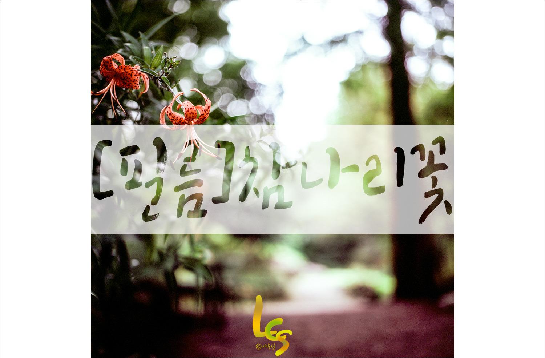 [필름]참나리꽃