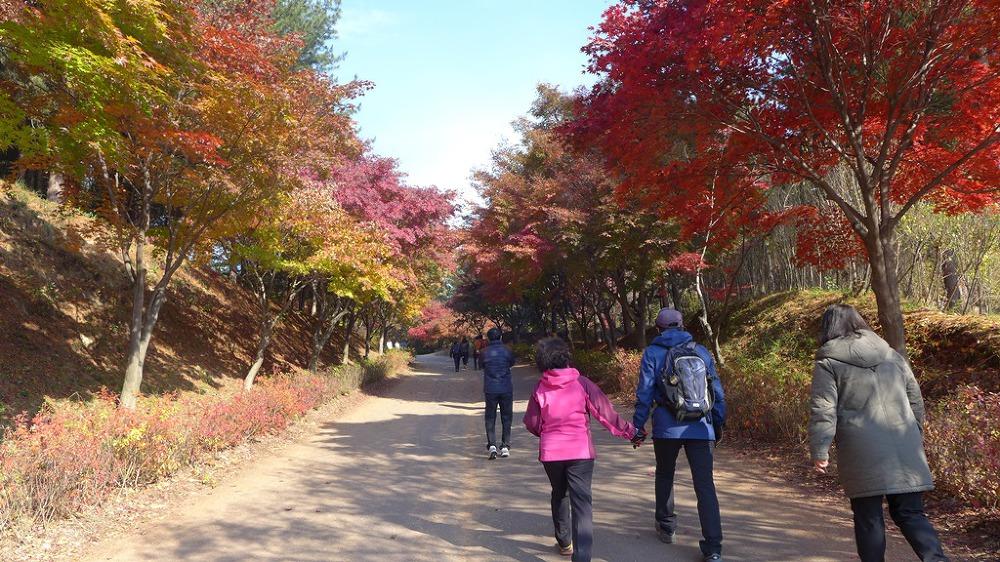 독립기념관 단풍나무길