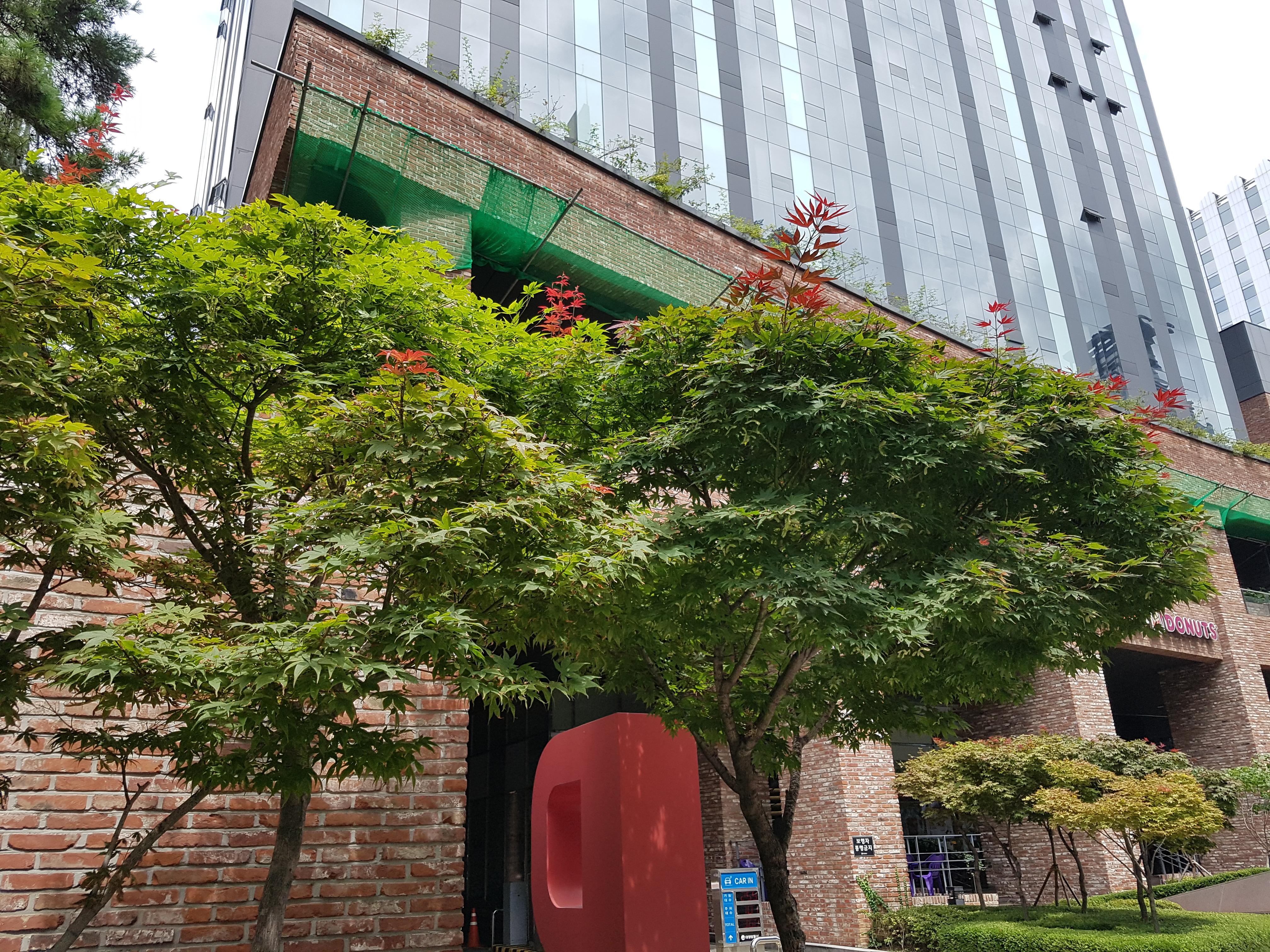 푸른 단풍나무 가지 끝에 빨간 잎