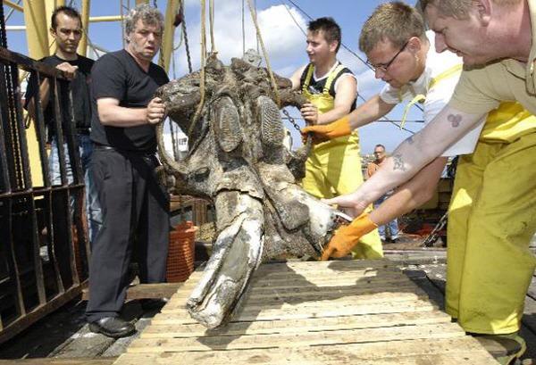Doggerland mammorth skull