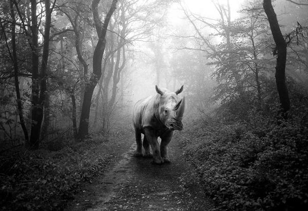 포토샵으로 자유가 된 동물들22