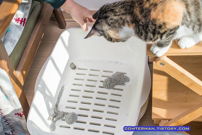 루이 고양이 화장실 청소
