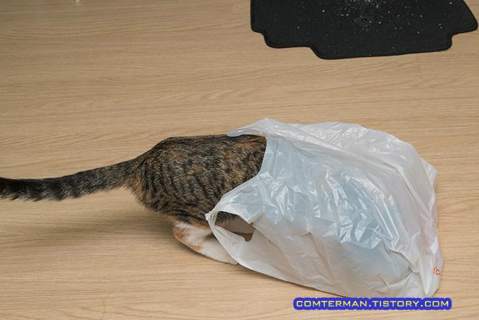 고양이 비닐봉지