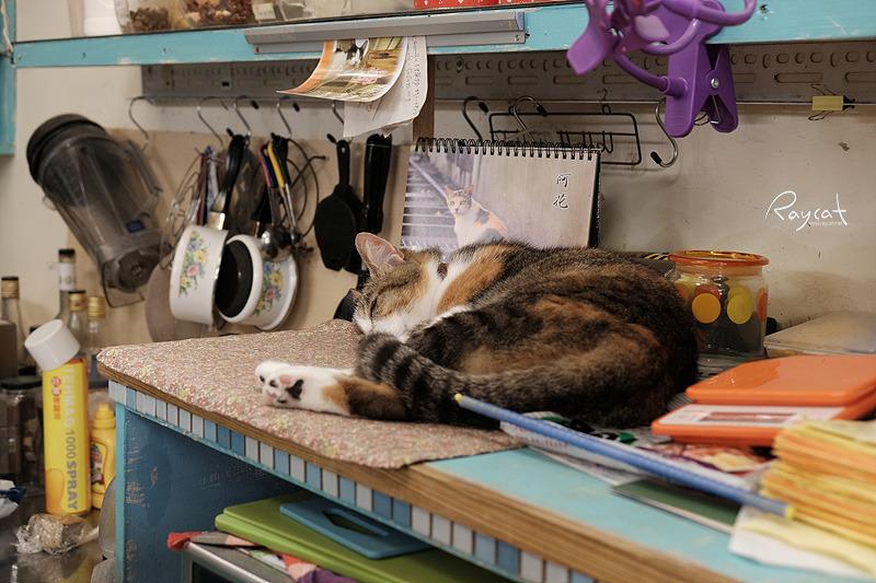 허우통 고양이 마을 카페의 고양이
