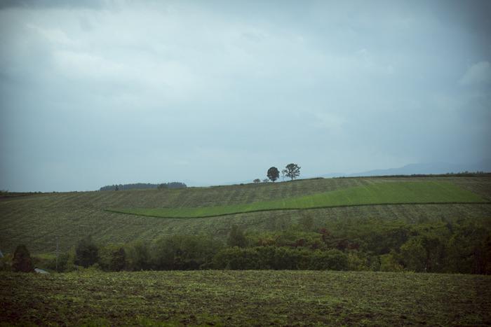 홋카이도 비에이의 가족 나무